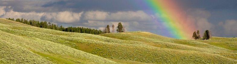 Regenbogen über Wiese