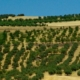 Landschaft in Andalusien