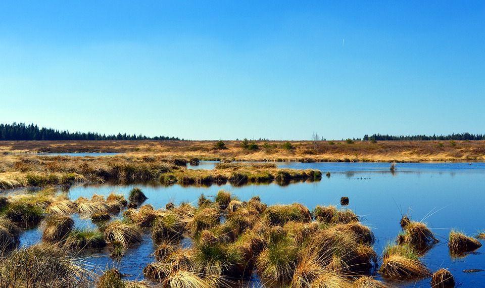 Moorlandschaft vor blauem Himmel