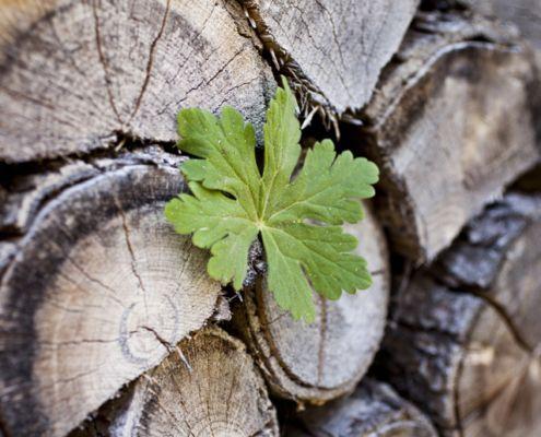 Grünes Blatt vor gestapeltem Holz