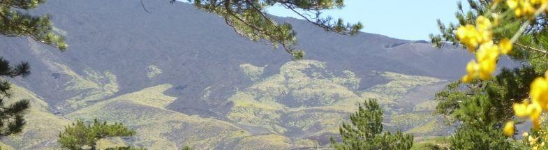 Wald vor dem Vulkan Ätna auf Sizilien
