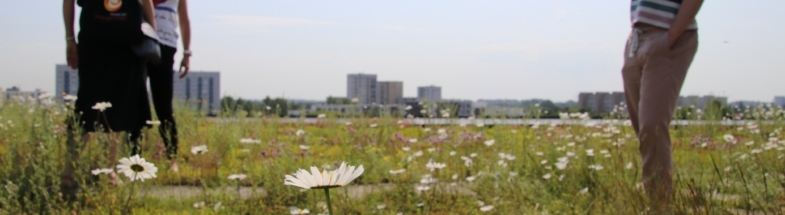 Green roof of the Hamburg Ministry of the Environment with a view over Wilhelmsburg