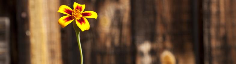 Eine Blume vor gefällten Bäumen im Wald.