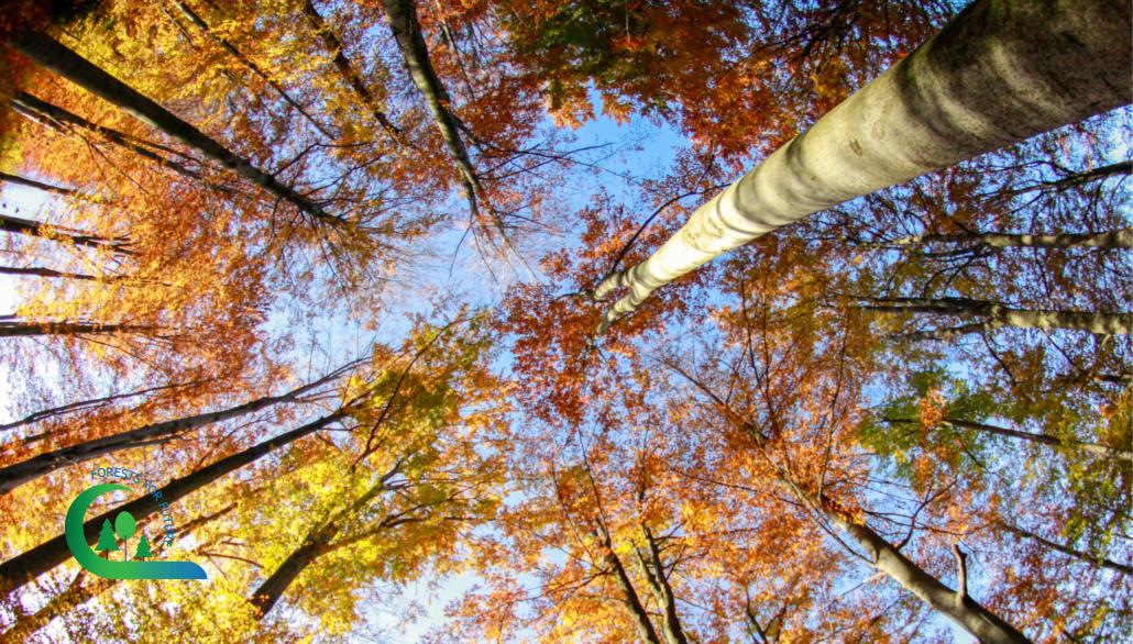 Gesunde Baumkronen können erkannt werden, wenn Forstwirte trainiert sind.