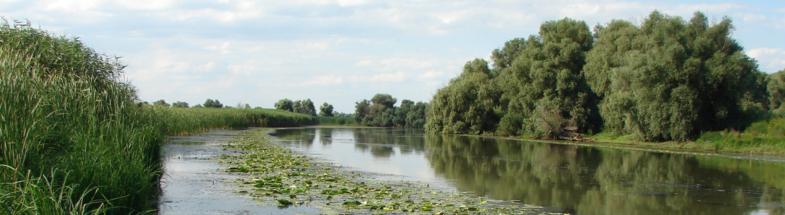 Die Böden im Donau Delta fungieren als wichtige CO2-Speicher.