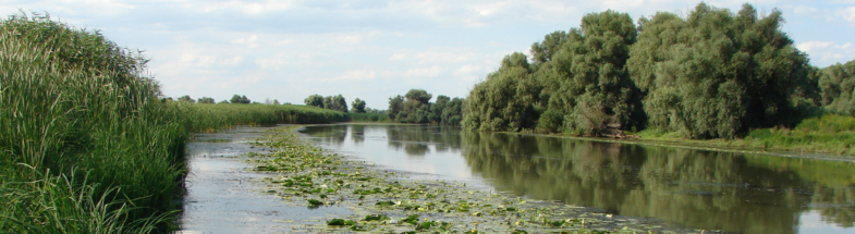 Organic soils in the Danube Delta can absorb CO2.
